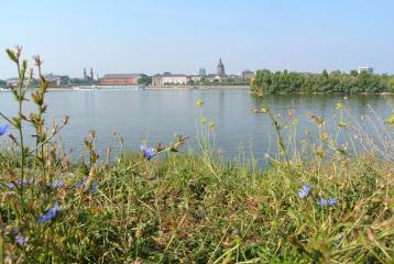 Dag Mainz, volgende keer bezoeken we de Dom