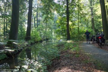 Door de bossen in Oosterbeek